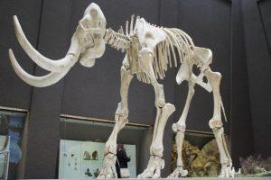 Группа ученых рассказала, где и когда погибли последние мамонты