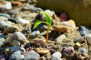 Ученые вырастили культурные растения на лунном и марсианском грунте