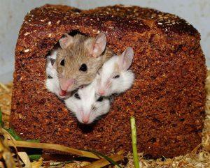 Медики рассказали, когда хлеб может стать опасным для здоровья