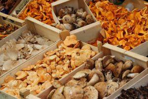 Врачи назвали грибы, помогающие укрепить иммунитет